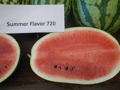 Summer Flavor 720 Watermelon