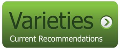 Current Recommendations for Corn Varieties