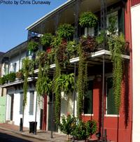 Common wall structures in the French Quarter.