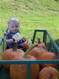 boy in pumpkin wagon