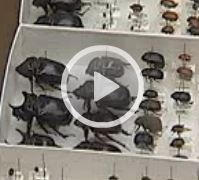 Entomology Department Video