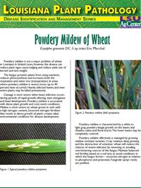 Louisiana Plant Pathology Series (Wheat) Powdery Mildew of Wheat