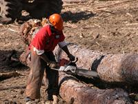 Professional logger wearing protective equipment