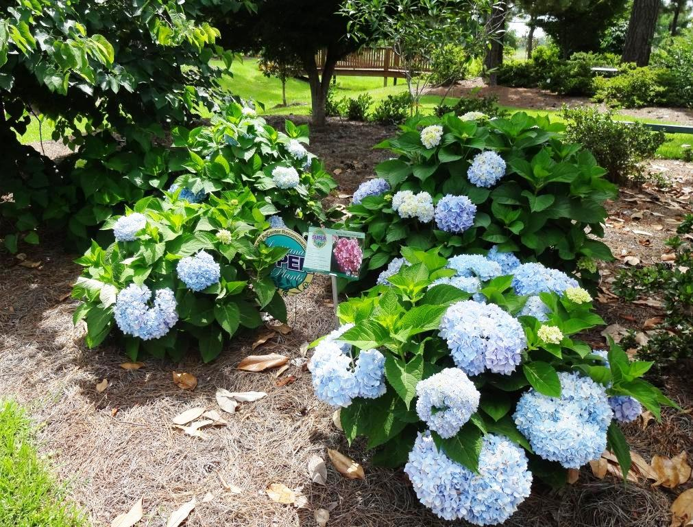 Research gardens growing in hammond pressreleasepoint for Macintosh garden