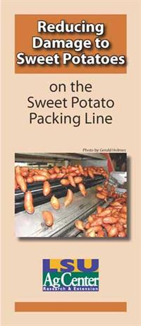 sweet potato packing line