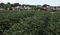 soybeanfield day