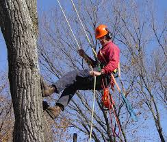 Please click here for information about Urban Forestry.