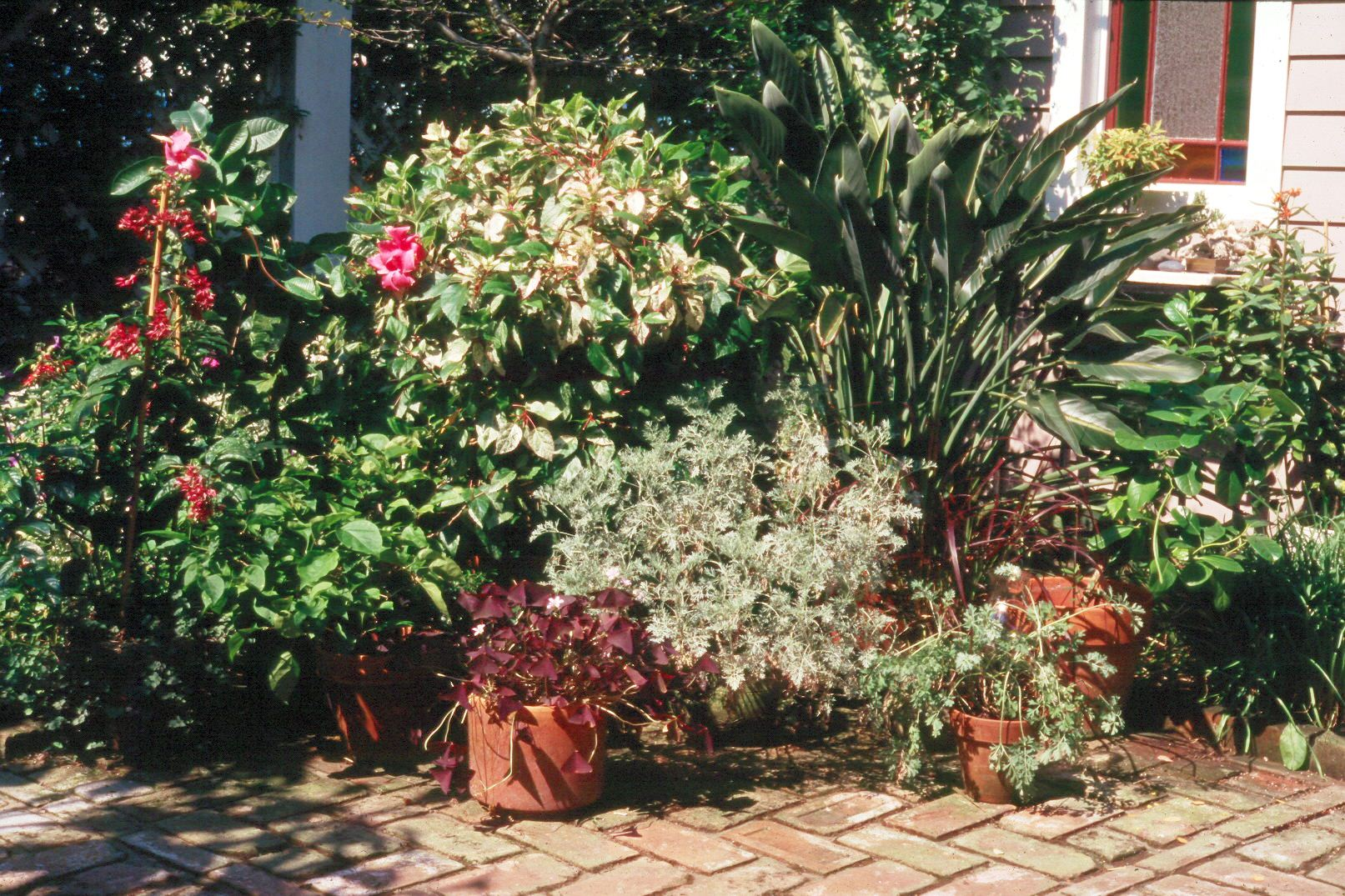 Different sizes of containers can hold a variety of plants for patios