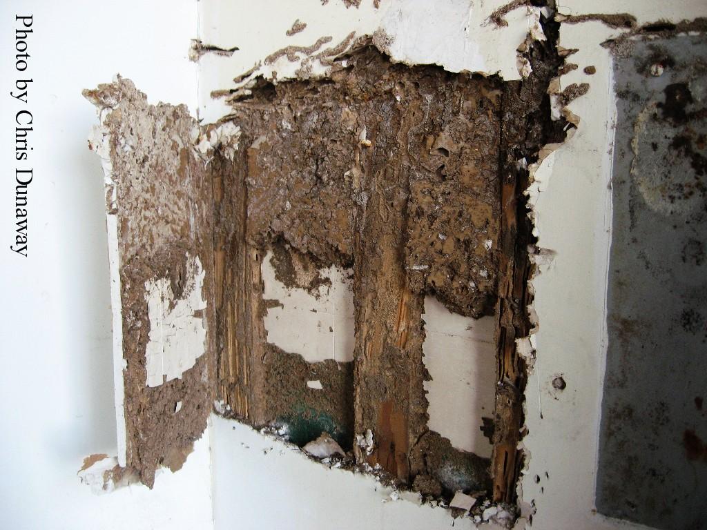 Termites nest - photo#19