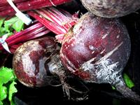 Photograph of Whole Beets
