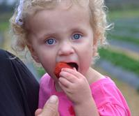enjoying a strawberry