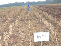 Ron Levy in no-till field