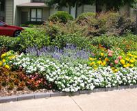 summer bedding plants