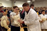 Poultry Contest
