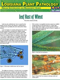 Louisiana Plant Pathology Series (Wheat) Leaf Rust of Wheat