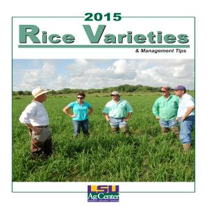 pub2270RiceVarieties2015FINAL thumbnail