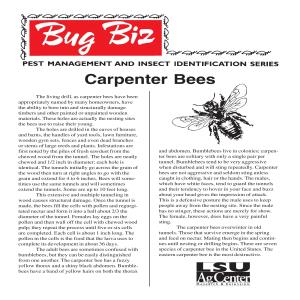 pub2875CarpenterBees2 thumbnail