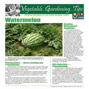 Vegetable Gardening Tips Watermelon
