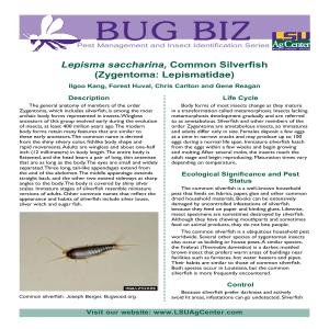 3737 Common Silverfishpdf thumbnail