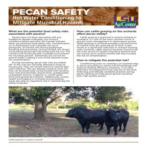 3642 Pecan Safety 0918 revpdf thumbnail