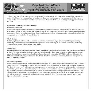 Cow Nutrition Affects Calf Healthpdf thumbnail