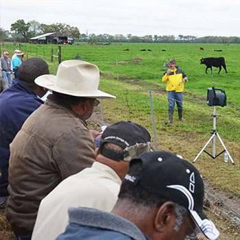 Beef Cattle and Forage Field Days