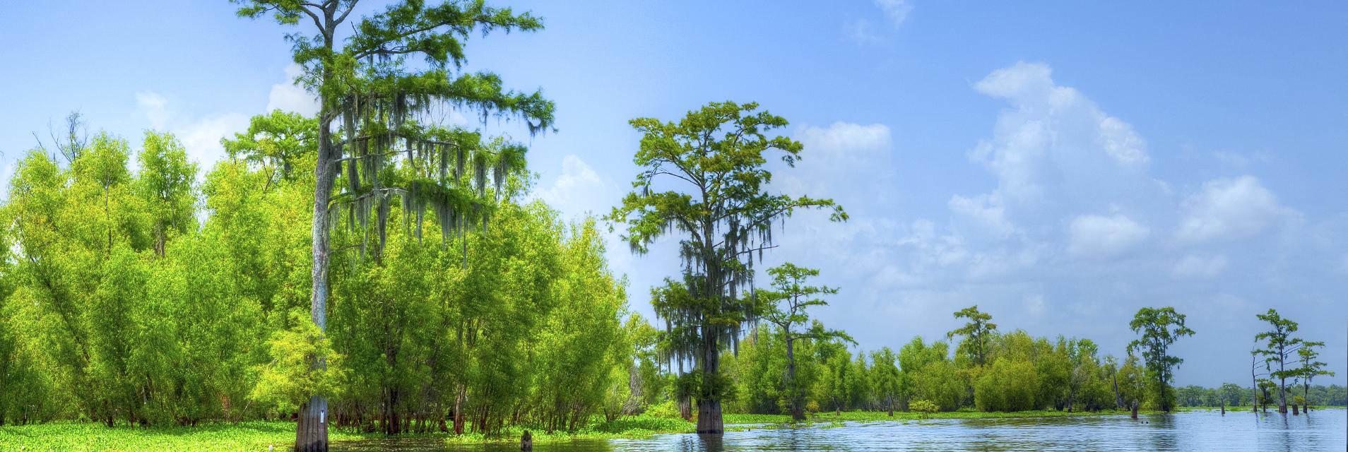 Lsu School Of Renewable Natural Resources