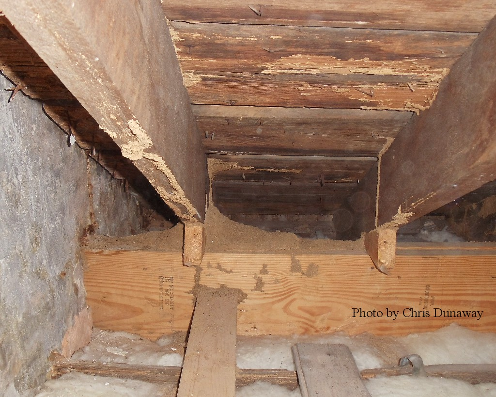 Termite tubes and nest visible in attic