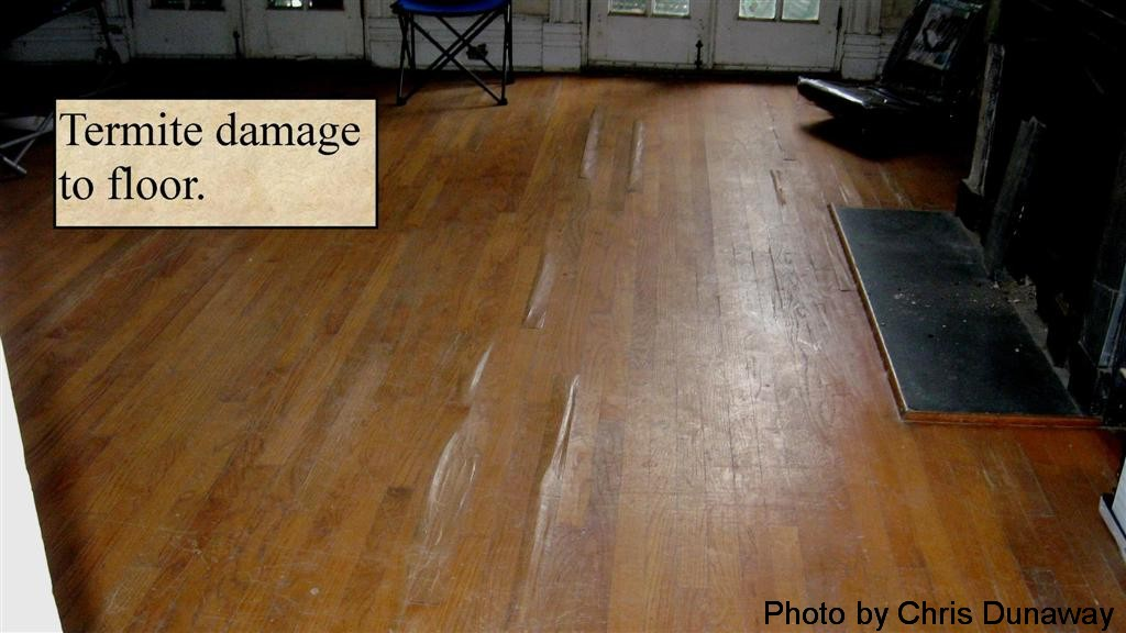 Termite damage to wood floor.