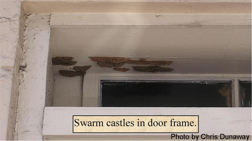 Swarm castle in door frame.