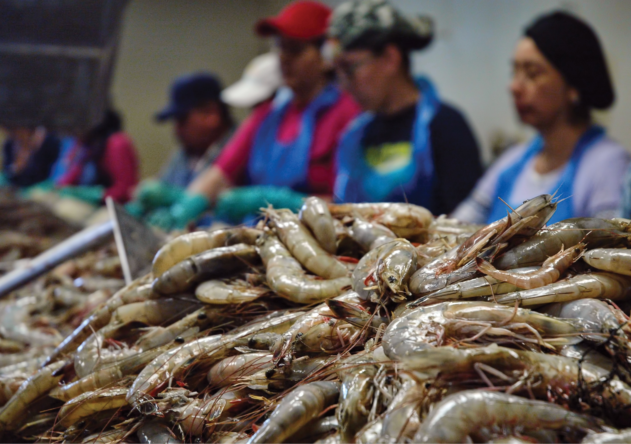 Economic Impact of H-2B Visa Workers on the Louisiana Seafood Processing Industry