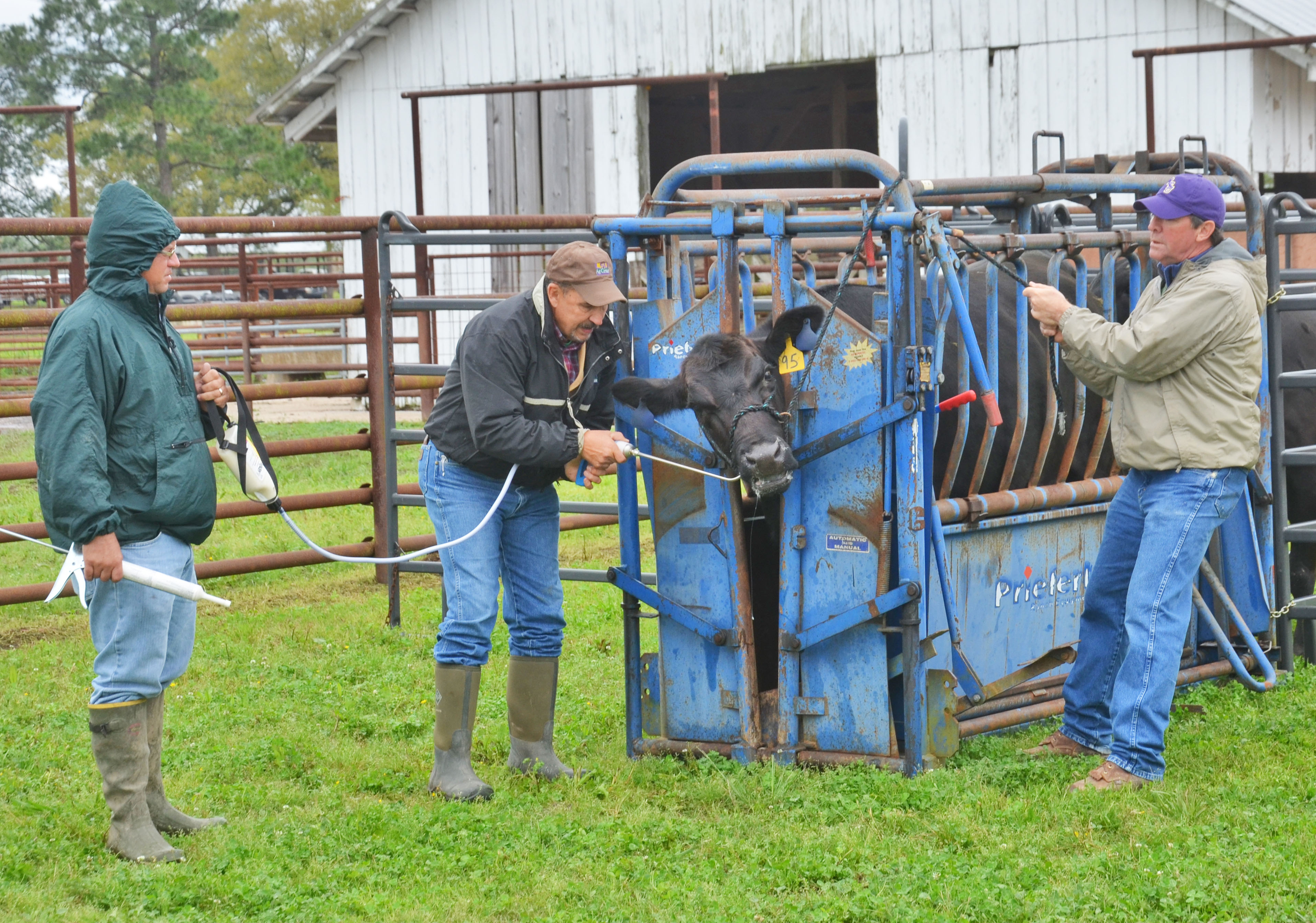 Beef producers hear about new regulations at field day