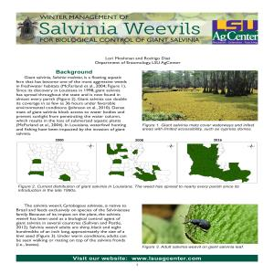Winter Management of Salvinia Weevils for Biological Control of Giant Salvinia
