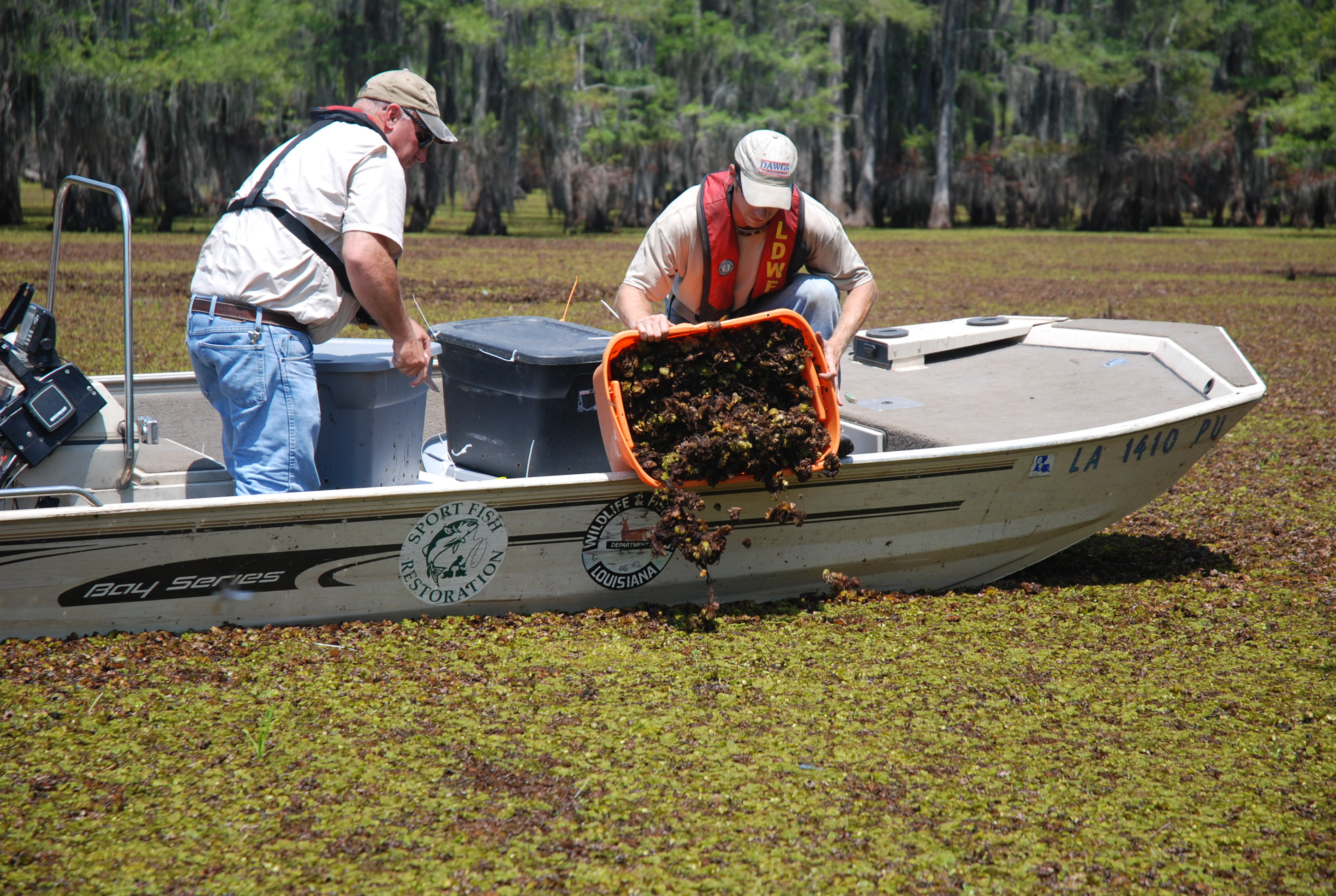 Fence may only be short-term solution to lake salvinia problem