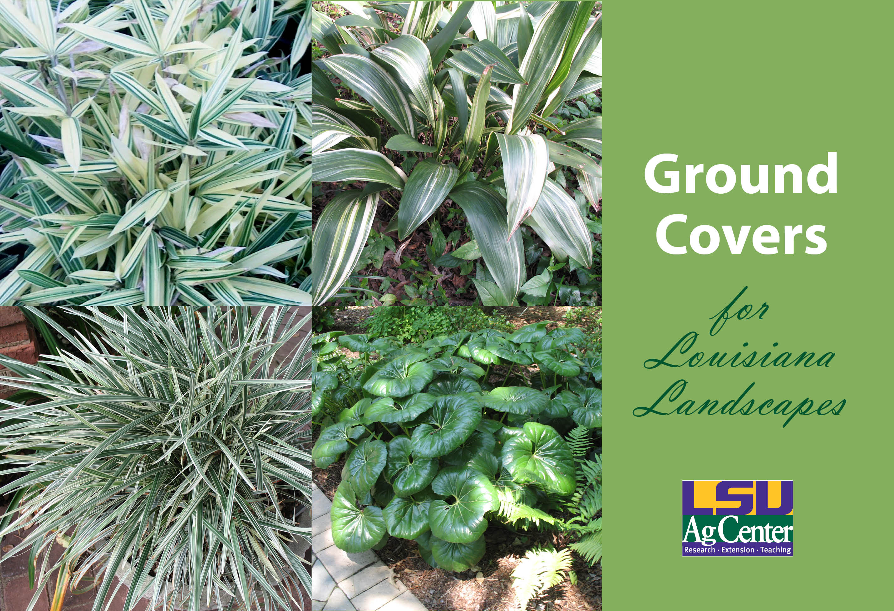 AgCenter has two new gardening publications for sale