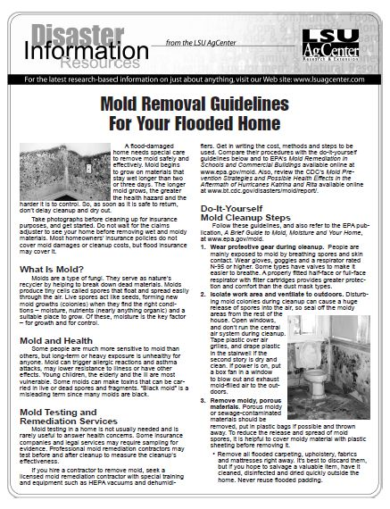 Mold Removal Guidelines for Your Home