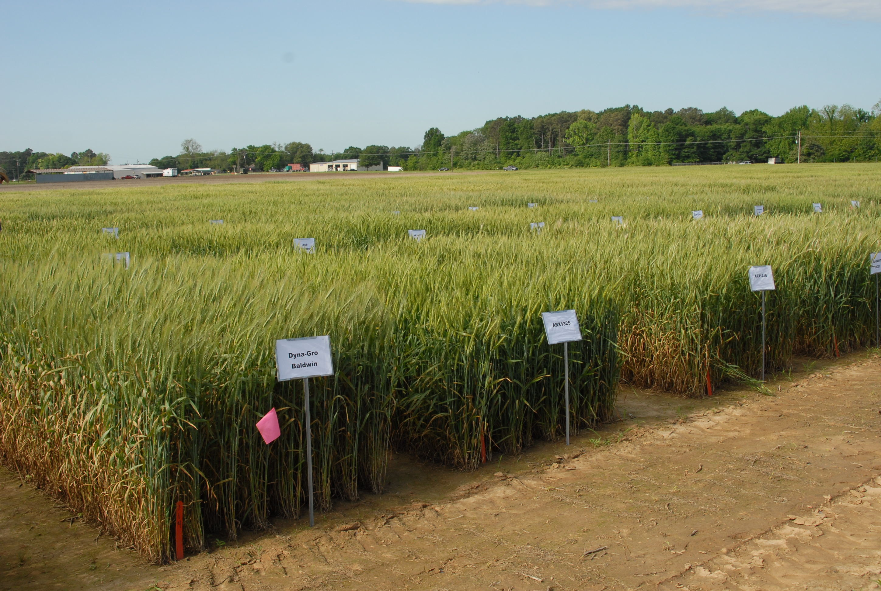 Wheat, oat field day set for April 19 in Winnsboro
