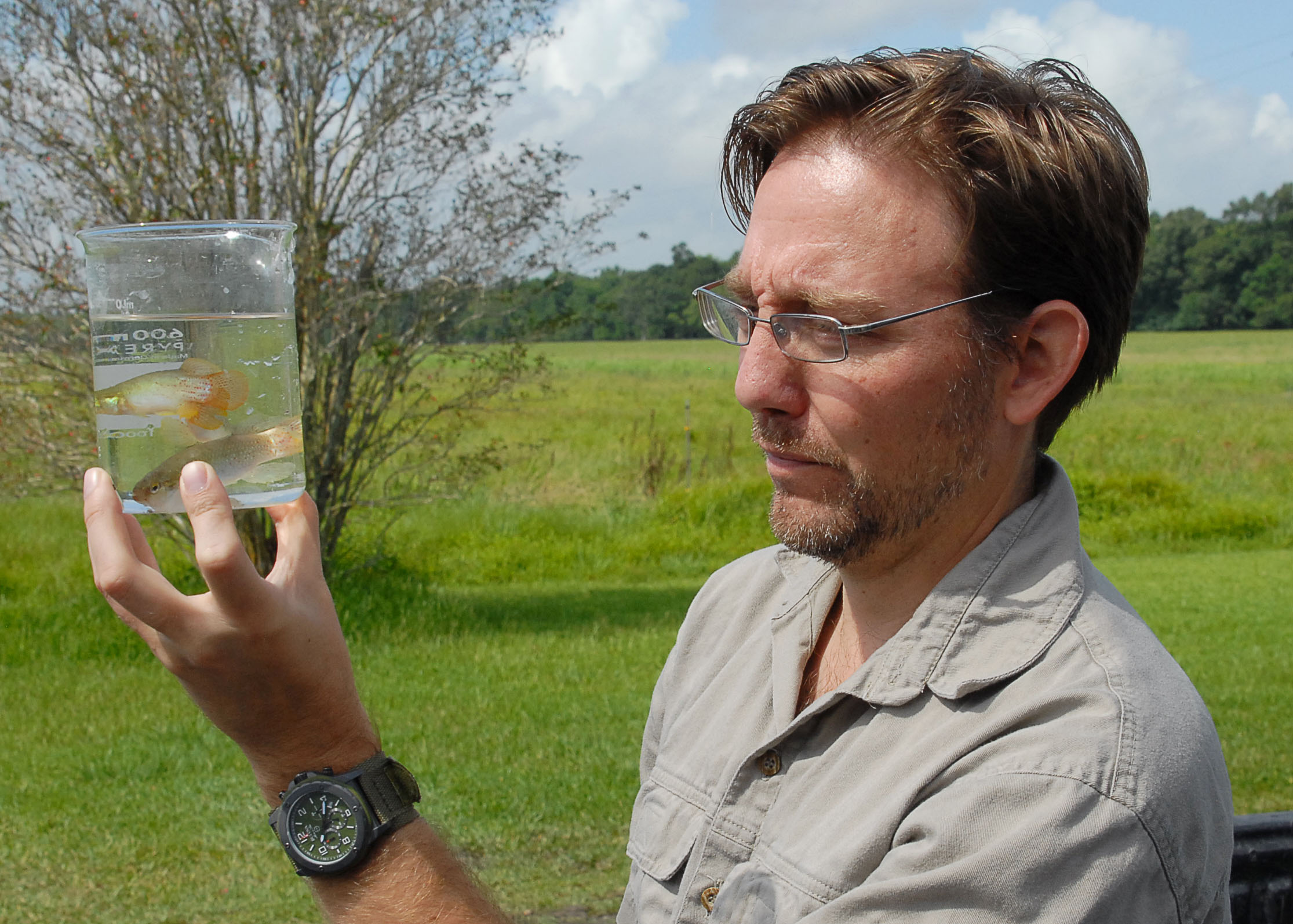 LSU AgCenter researcher looks to improve rearing of aquarium fish