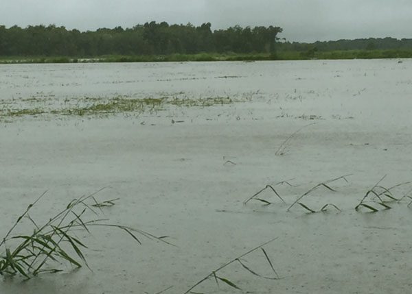 L Attales Rice with water over it1.jpg thumbnail