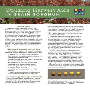 Utilizing Harvest Aids in Grain Sorghum