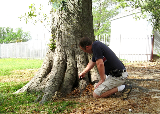 Inspect for termites at tree base.