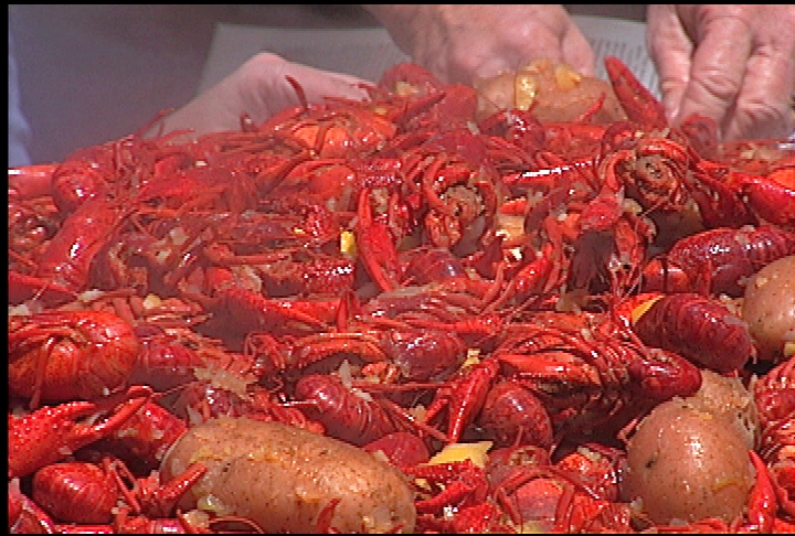 Crawfish catch should be good this year