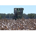 La. cotton harvest could break record
