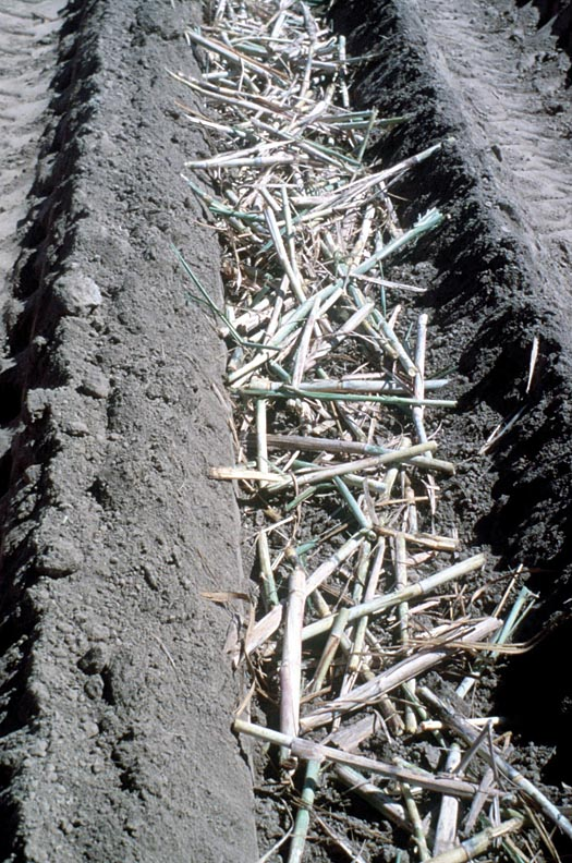 Billets are shown in the planting furrow