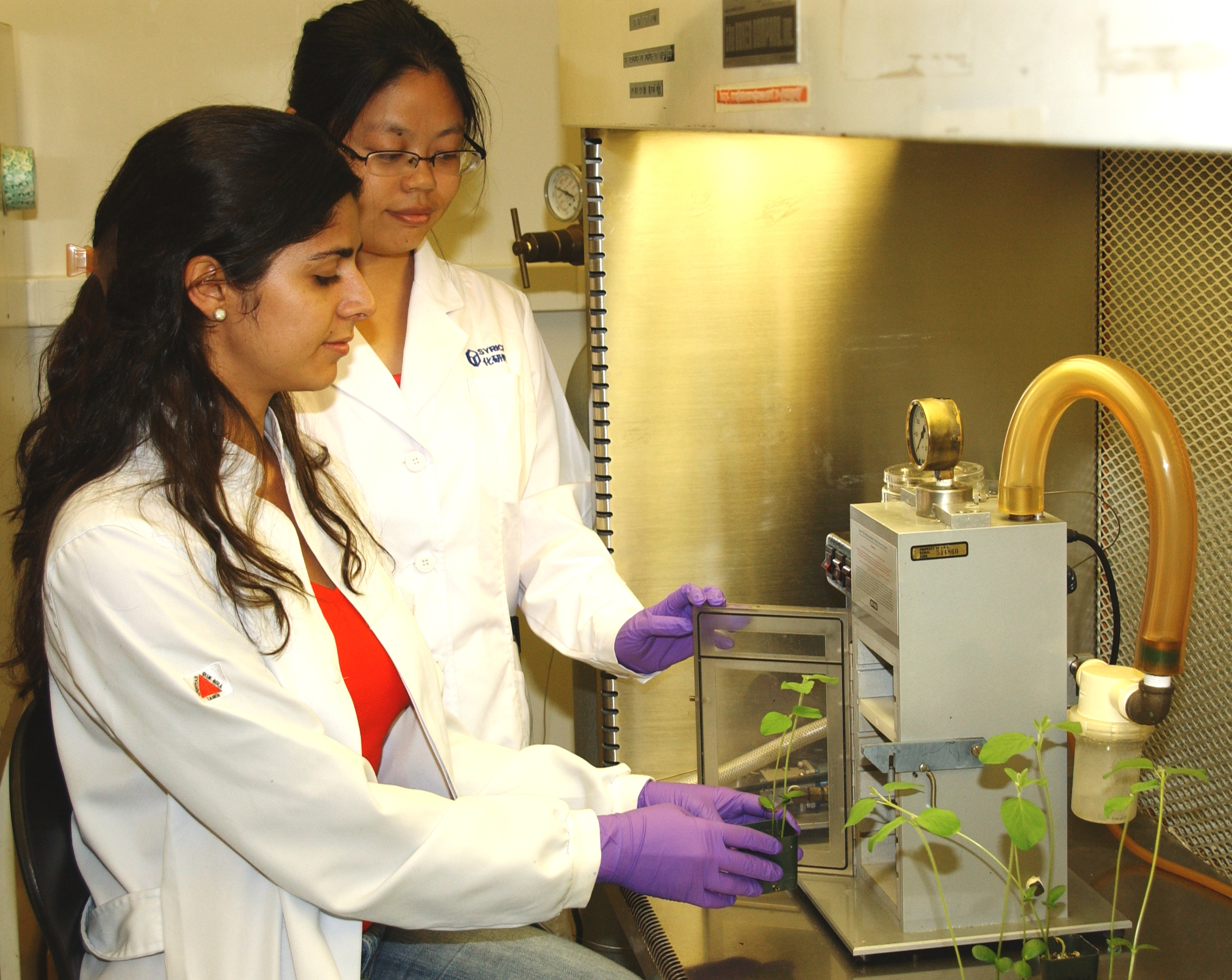 Hunt for soybean disease resistance uses molecular biology