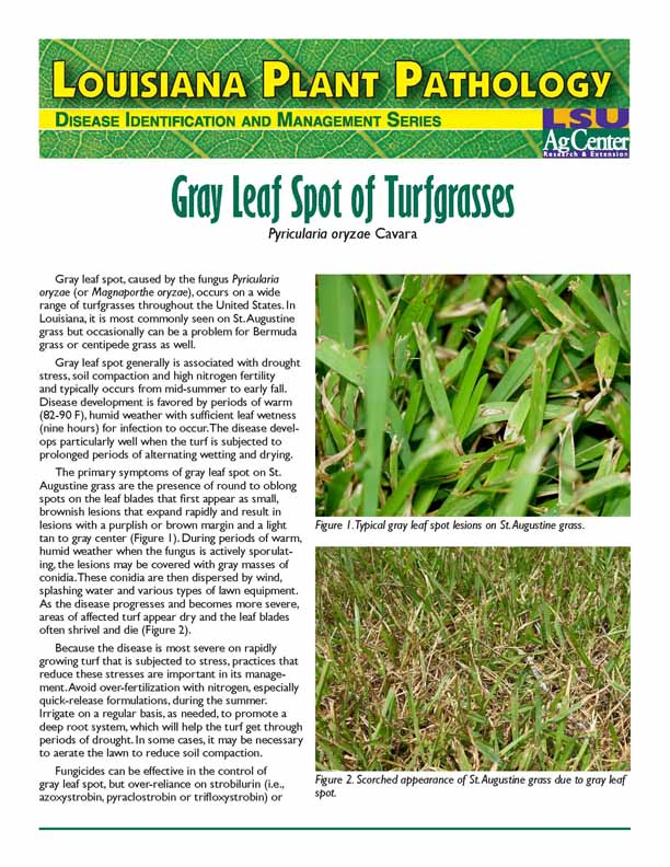 Louisiana Plant Pathology:  Gray Leaf Spot of Turfgrasses