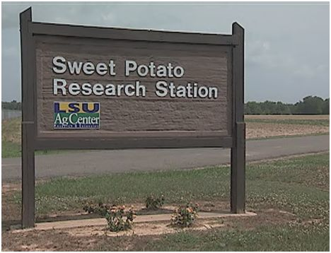 Sweet Potato Research Station Video