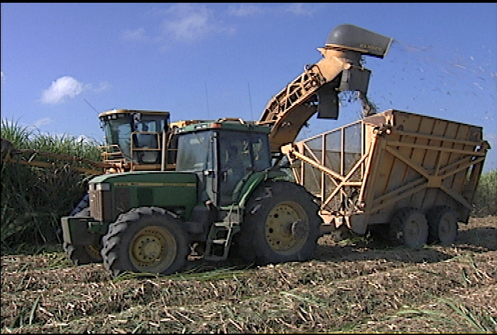 Weather helps sugarcane harvest move quickly