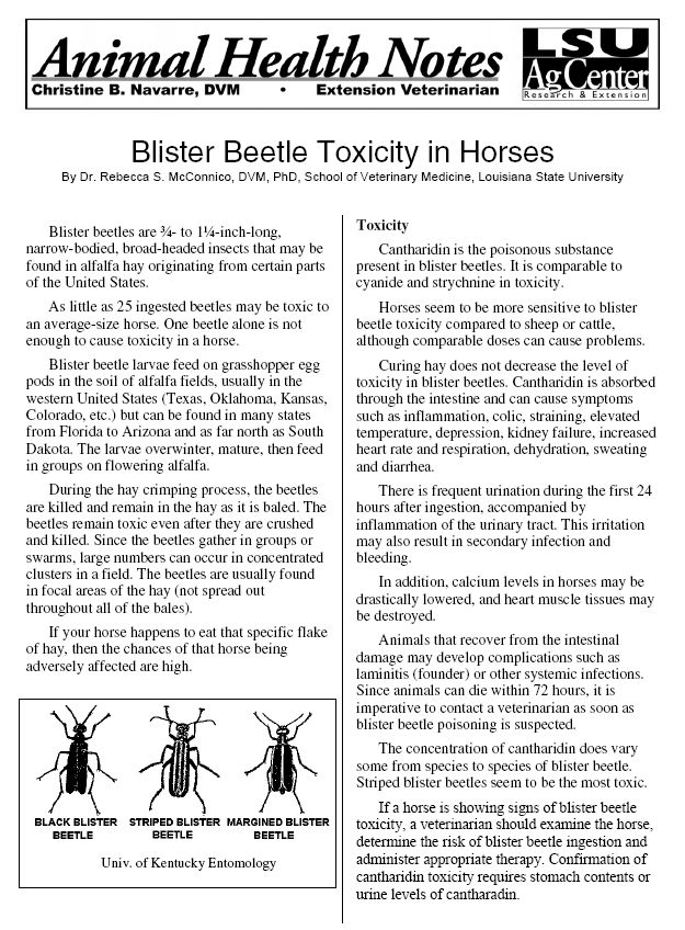 Blister Beetle Toxicosis in Horses