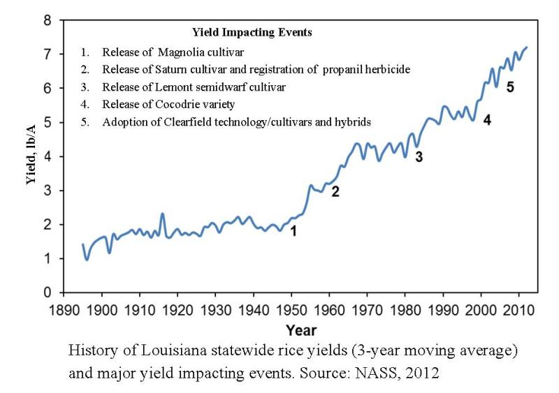 Yield Gains in Louisiana Rice